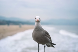 seagull, ocean, animal, beach, bird, sea, summer, water, waves