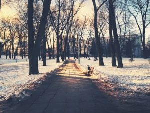 nature, park, snow, tree, weather, winter