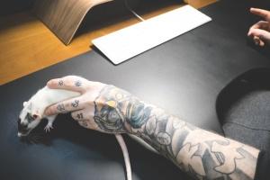 hånd, menneskelig, tastatur, mus