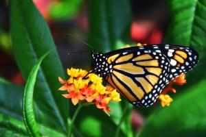 güzel, çiçek, çiçek, parlak, kelebek, hayvan, renk