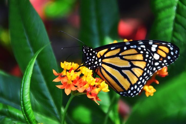 krásne, kvitnú, kvety, svetlé, motýľ, živočíšne, farba