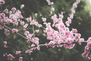 flora, flowers, garden, vegetation, nature, park, petals