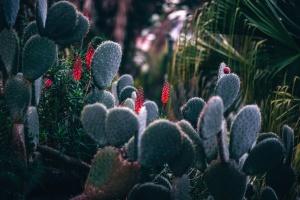 Botaniska trädgården, kaktus, växter, törnen