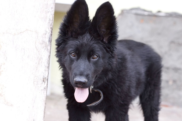 animal, cute, dog, canine, pet