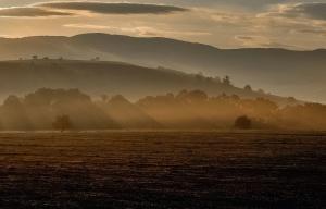 hills, landscape, mist, morning, tree, agriculture