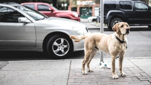cars, dog, street, pavement, pet, vehicles