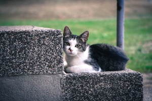animal, cat, cute, feline, kitten, pet, stairway