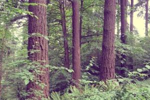 植物, 树木, 森林, 自然