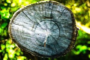 木头, 森林, 树, 树干