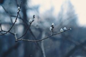 Park, träd, gren, blomknoppar, fokus, karaktär