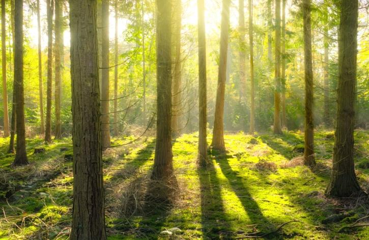 forest, gras, landscape, nature, sun, glare, park