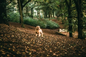 autumn, forest, tree, autumn season, leaves, dog