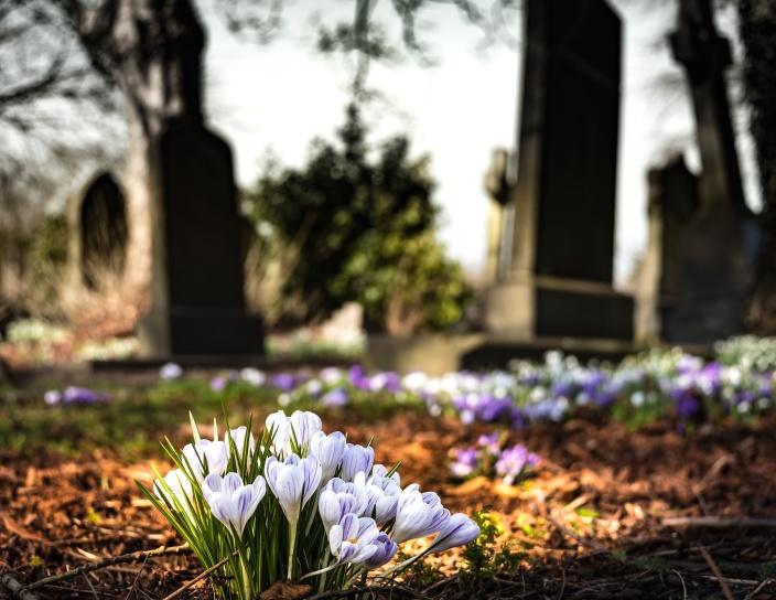 grass, graveyard, petals, bloom, blossom, cemetery, flora, flowers