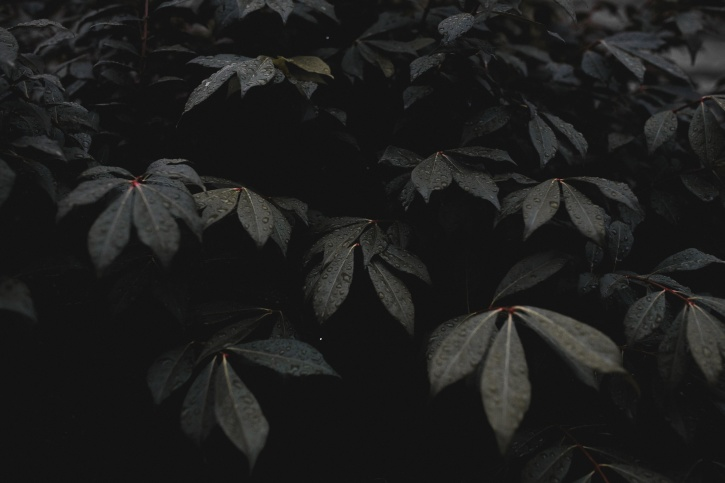 plant, dew, leaves