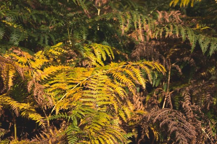 natura, piante, felce, foglie