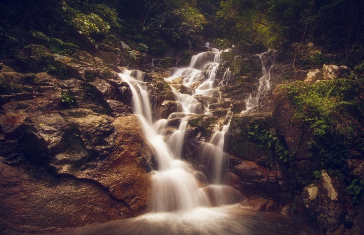forest, jungle, mountain, river, tree, waterfalls