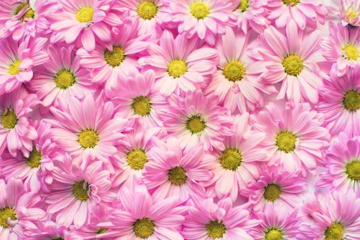 beautiful, blooming, blooms, blossoms, flowers, pollen
