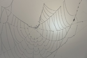 dew, spider web, mist