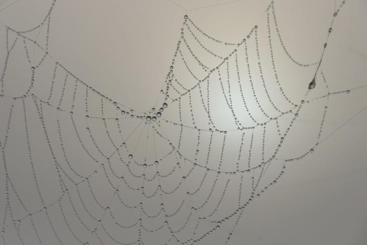 dew, spider web, mist