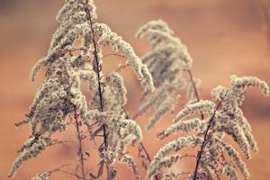 makro, växt, blad, sommar