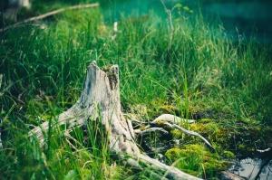 tronco d'albero, acqua, foresta, giardino, erba