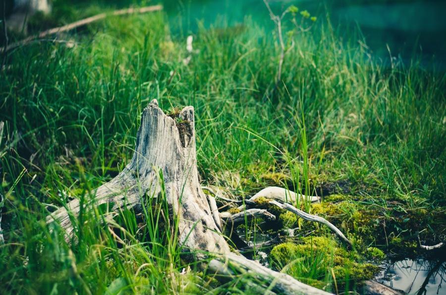 树干, 水, 森林, 庭院, 草