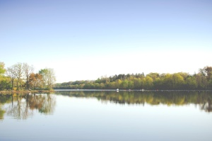 nature, lake, reflections, sky, tree, water
