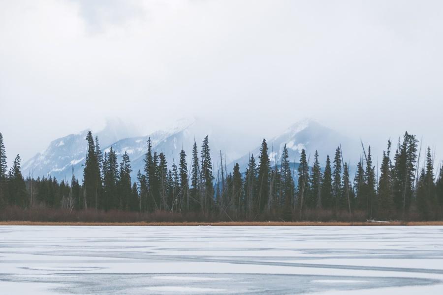 nature, river, snow, tree, winter, conifer tree, fog, ice, lake