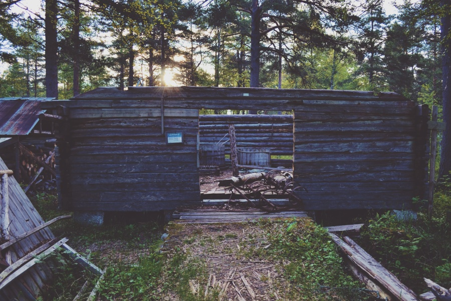 tree, wooden, wood, shack, forest, grass, home, house, landscape