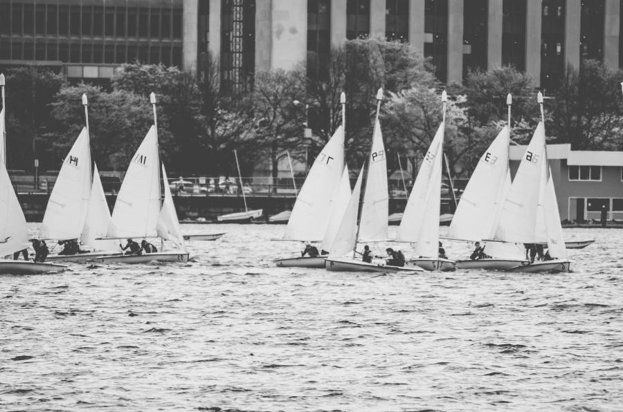 water, sport, tree, sailsboat, sea
