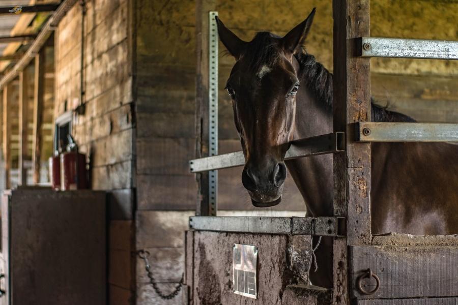animal, barn, building, wood, farm, fence, horse