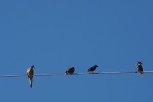 animals, birds, wire, blue sky