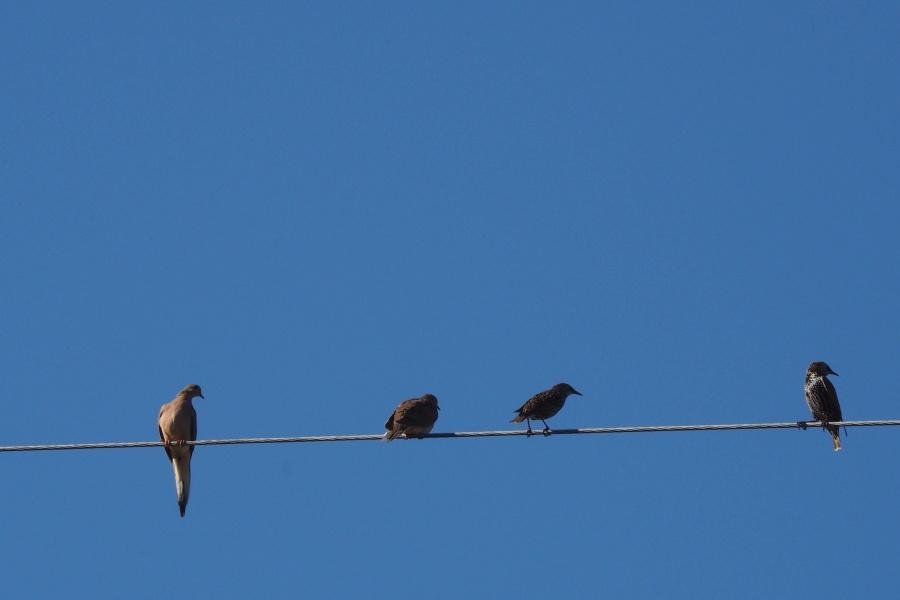 animais, aves, fio, céu azul