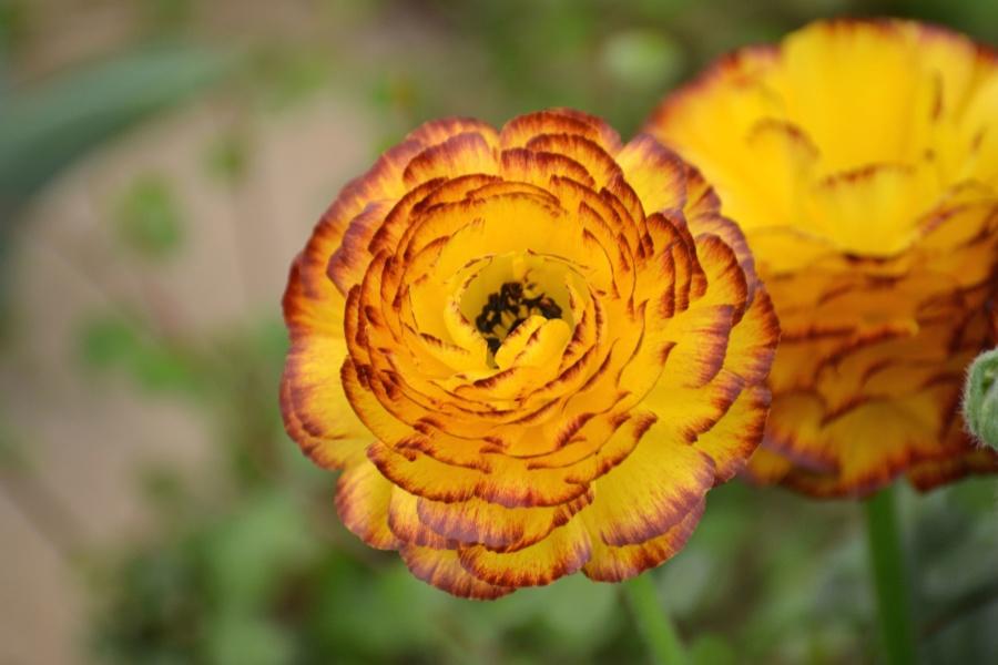 vegetation, summer, yellow, blossom, bloom, petals, flower, plant