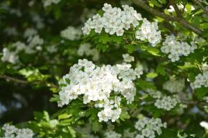 flower, branch, spring time, bloom, nature, petals