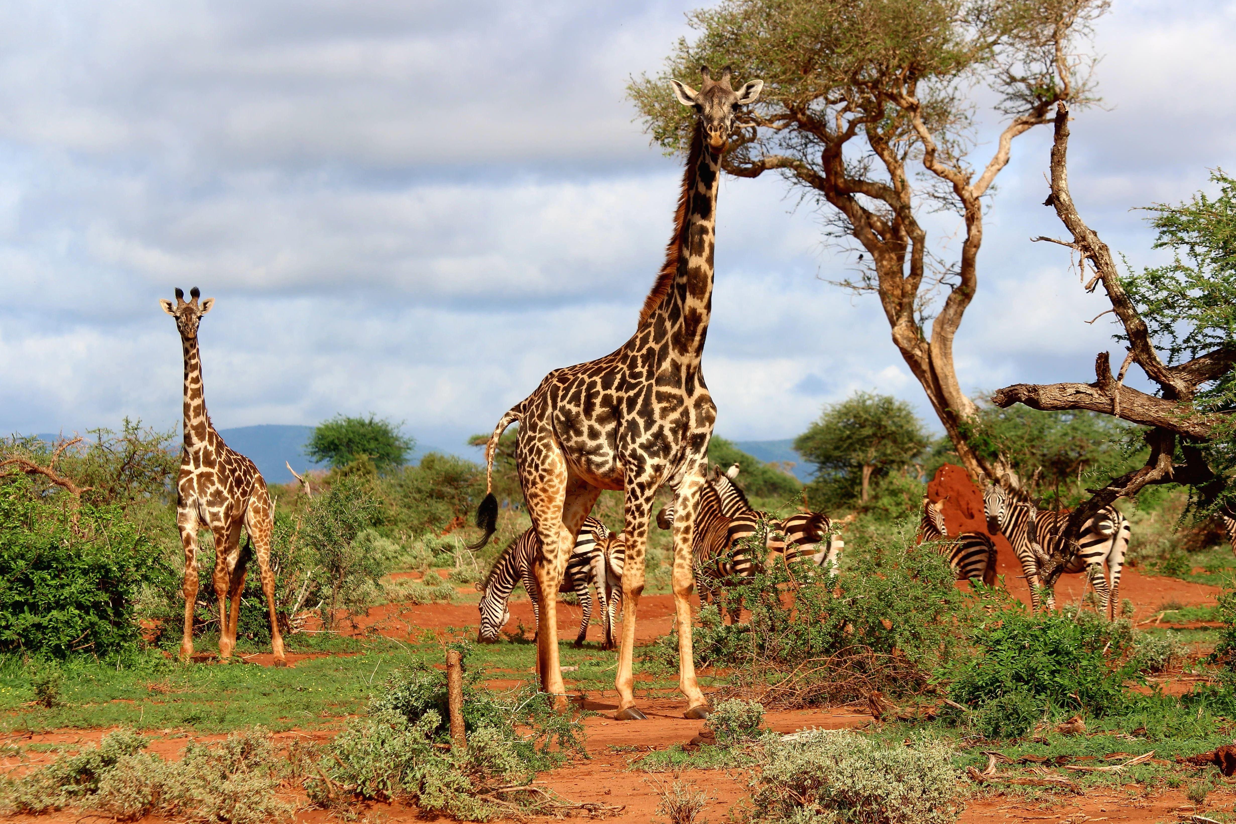 Африка картинки и информация