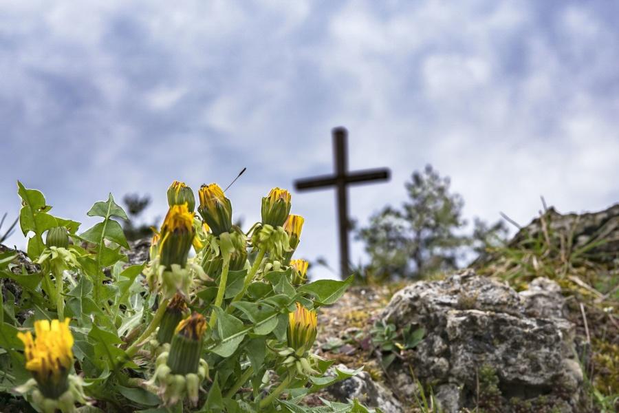 garden, plant, blossom, bloom, nature, flowers, dandelion, rock, cross