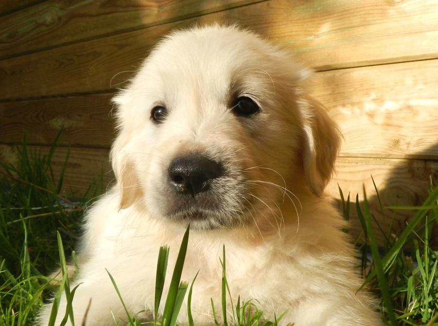 dog, grass, pet, looking, fur, wood, shadow