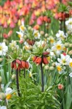 Blumengarten, Frühling, Vegetation, Blume, bunt, Narzissen