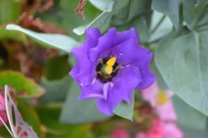 природа, пролет, цвете, растение, лилаво, цъфтящи, плодник, венчелистчета