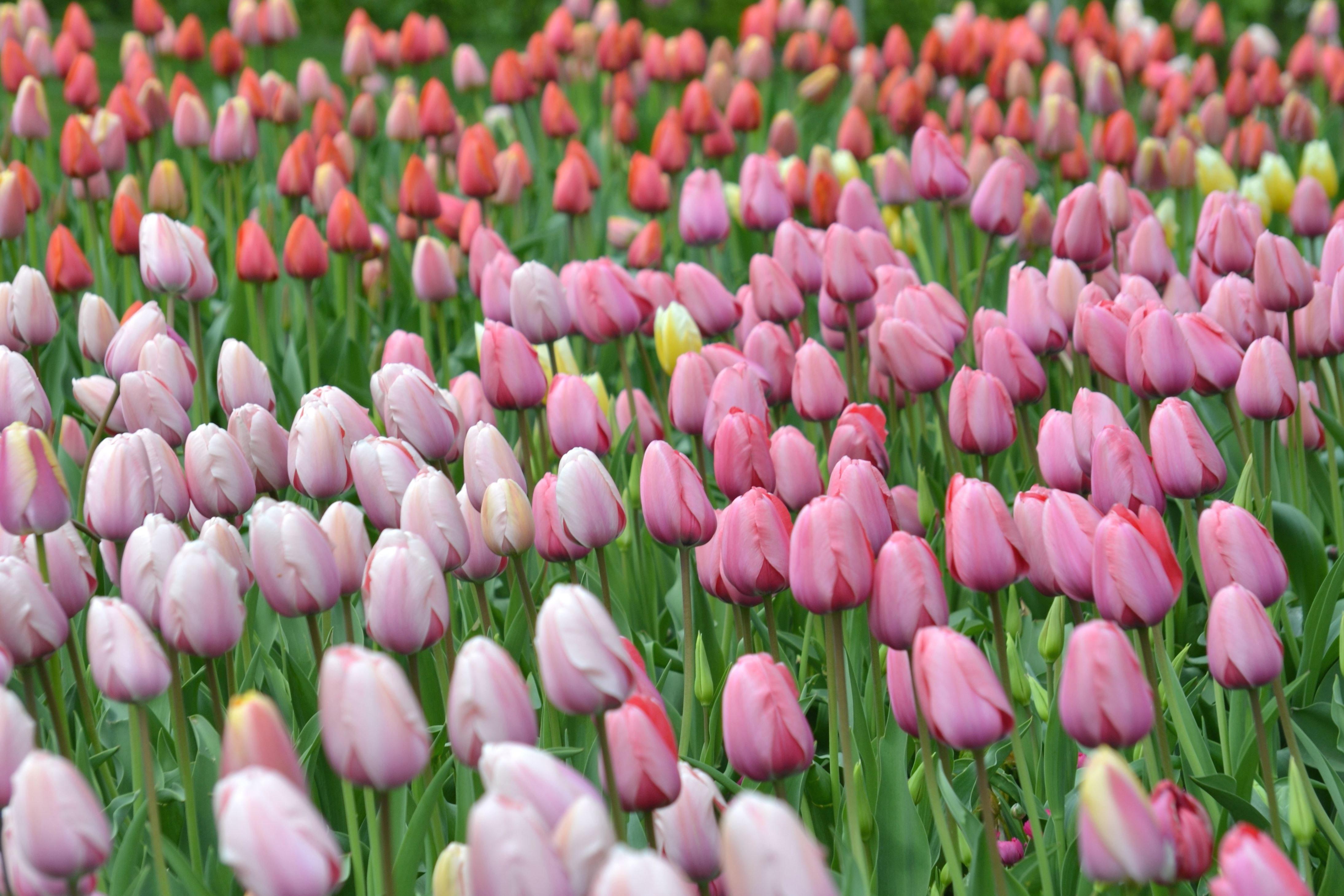 Imagine Gratuită Flori Colorate Gradina Flora Primavara