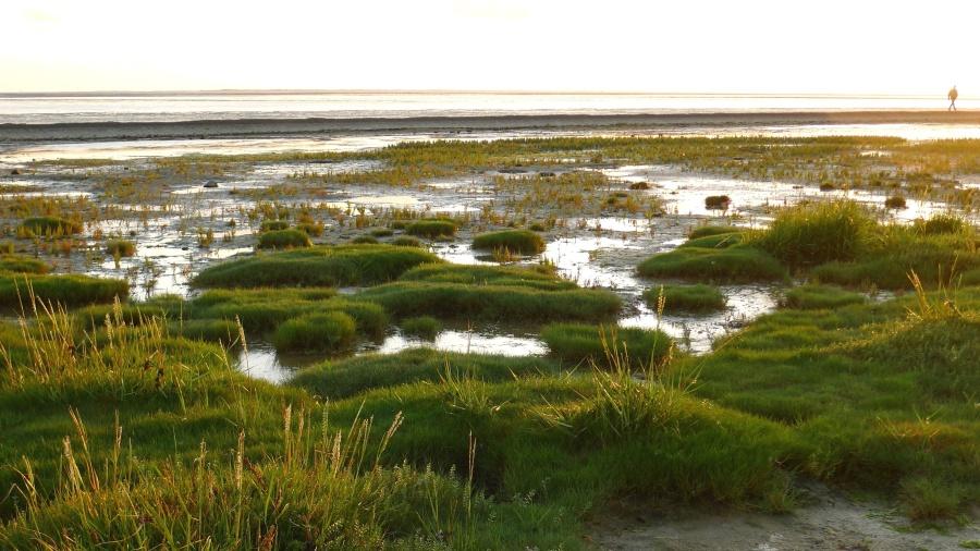 green swamp, grass, nature, water, wetlands, sun, sky