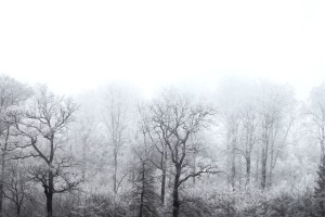 fog, nature, trees, winter, forest, frozen, snow