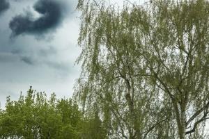 sky, clouds, tree, branch, vegetation, spring, nature