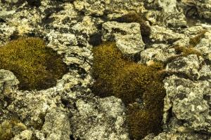 nature, moss, rock, lichen, stones
