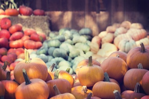 pumpkins, agriculture, farming, food, fresh vegetable