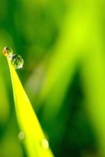 pianta, acqua, rugiada, bagnato, verde foglie, crescita, foglia