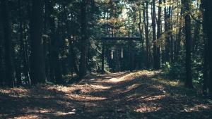 路径, 树, 森林, 自然, 道路