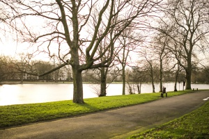 park, path, person, river, tree