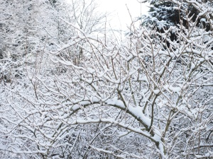 snow, tree, weather, winter, wood, branches, freezing, cold